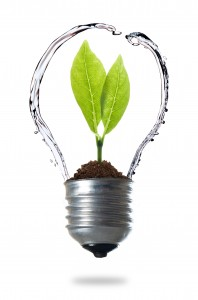 green energy concept, plant growing inside the light bulb with water